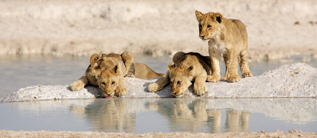 Best Safaris in Namibia - www.namibia-info.com