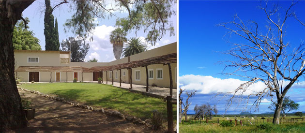 Otjiwarongo, okaputa guest farm, okaputa guesthouse, hurst arab stud, arab horses, namibia, etosha national park, caprivi strip, windhoek, accommodation, b&b, bed and breakfast, guest accommodation
