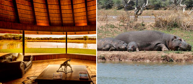 mount etjo, safari lodge, otjiwarongo, Okonjati Game Reserve, accommodation, game lodge, safari rooms, luxury rooms, standard accommodation, swimming pool, lions, elephants